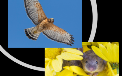 Complimentary Strengths …. seen as Hawk and Mouse animal totem medicine